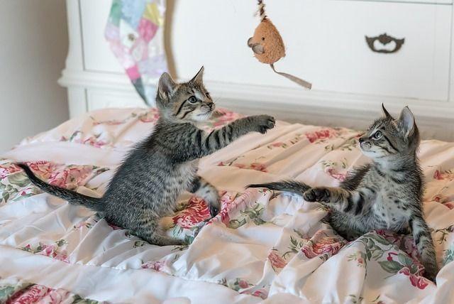 猫を育てるには〇〇万円必要!?