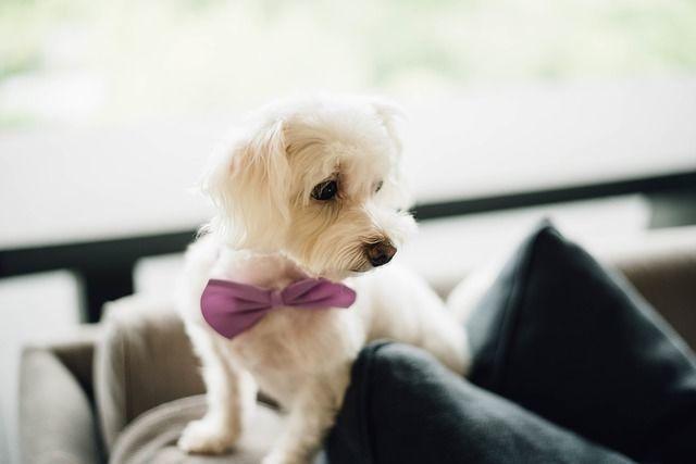 犬・猫用の抱っこ紐はどんな種類があるの?