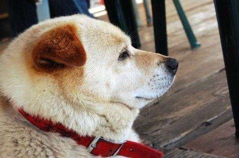 老犬介護の必要度チェックリスト