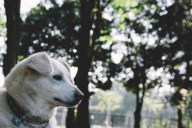 寿命を左右するサインかも?見た目・ニオイに出る愛犬の25の老化シグナル