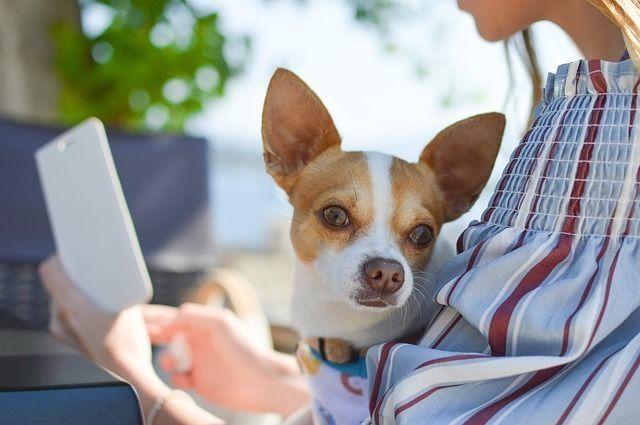 日本の動物愛護法にもあったらいいのに!ペット先進国ドイツ・スイスの動物愛護法とは