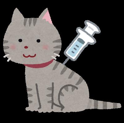 【猫】初めての病院受診【診察内容・予防接種・費用】