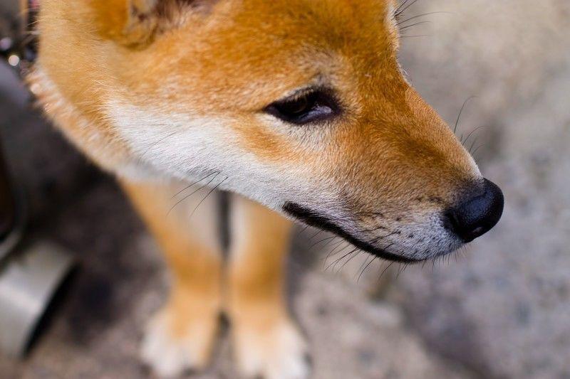 犬から人に感染する病気「人獣共通感染症」とはどんな病気!?種類と症状、原因、予防方法をご紹介します。