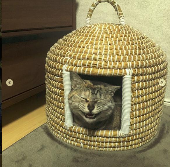 猫ちぐらの虜になっている猫が可愛過ぎ【8選】