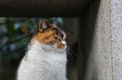 猫アレルギーの治し方・治療方法はあるの?