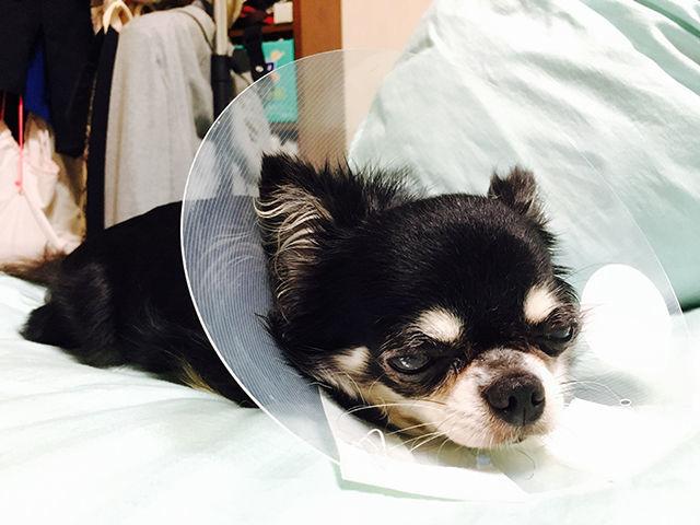 犬猫の肛門のう炎の治療費はいくら?症状・原因から治療・費用・予防法まで、犬猫の肛門の病気を知る|病気事典