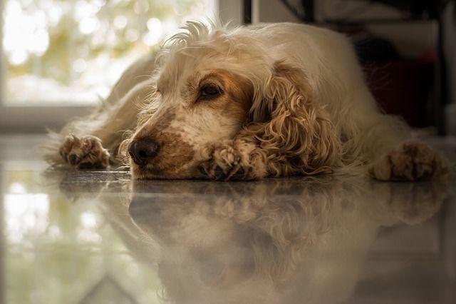 愛犬が下痢をしてる!!どうしたらいいの!?【下痢の種類・原因・対処法・病気・予防】