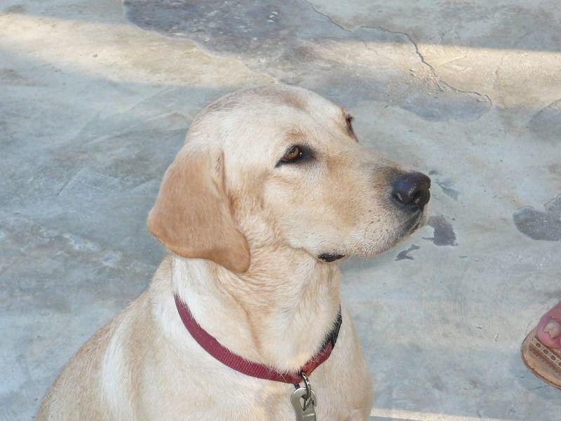 犬の上手な「マテ」の教え方・コツ・活用法