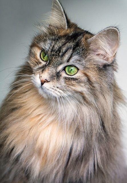 これでふわさらな毛並みに大変身!猫のブラッシング方法!