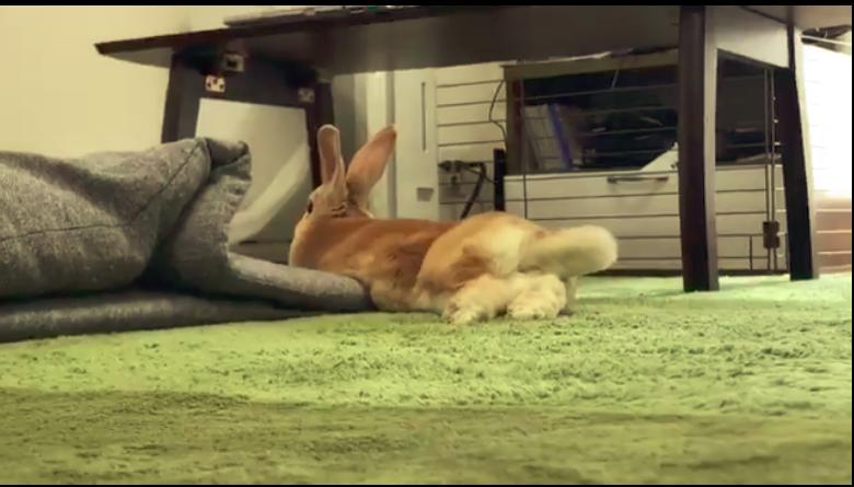小動物を飼っている方必見!部屋んぽの頻度・注意点を紹介