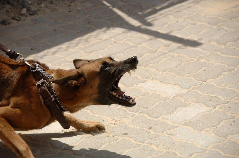 犬の問題行動ってどんな種類があるの?