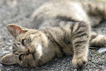 これで解決!水嫌いな猫の「水を使わない」3種類のシャンプー方法