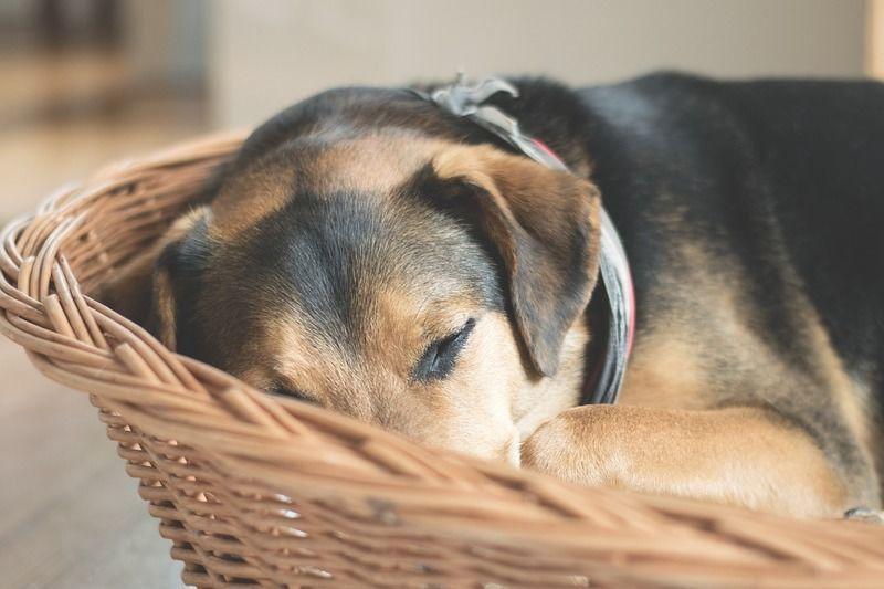 知っておきたい、犬の生涯にかかる飼育費用