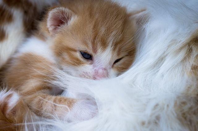 愛猫がふみふみと毛布などをマッサージしている2つの理由とは