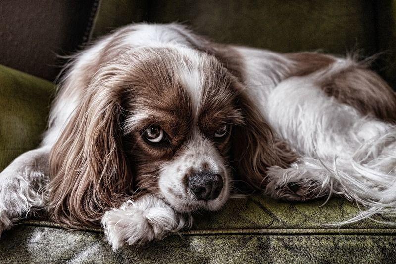 飼い犬に発疹ができてる!犬もなるアトピー性皮膚炎の原因と対策は?