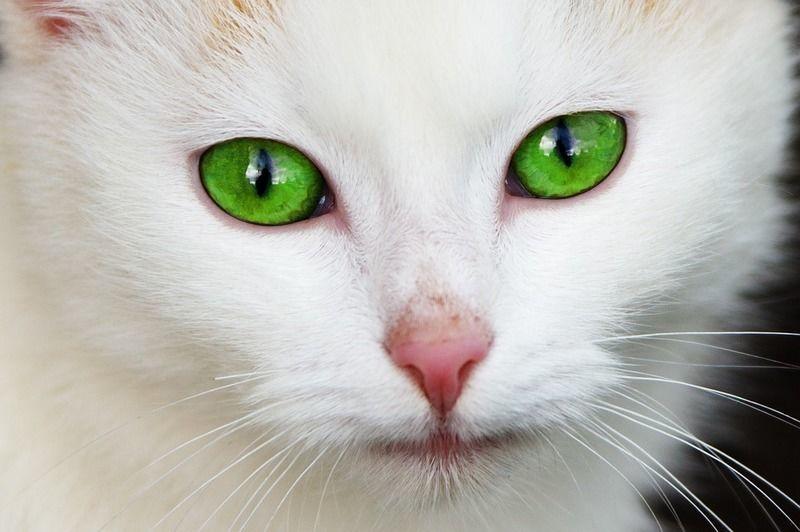 猫の目の病気事典!猫の目の異変は何の病気のサイン??