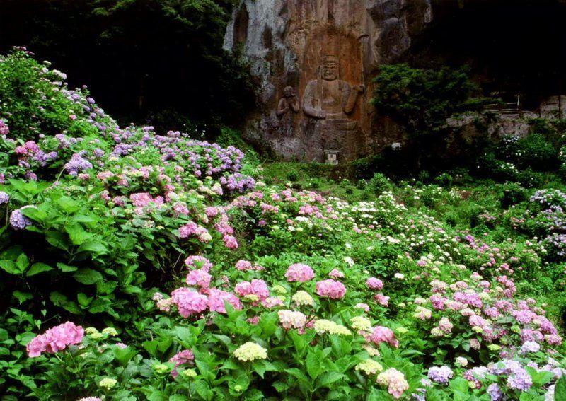 【ペットとおでかけ特集2019】別名「あじさい寺」と呼ばれる紫陽花の名所「普光寺」の磨崖仏を見に行こう