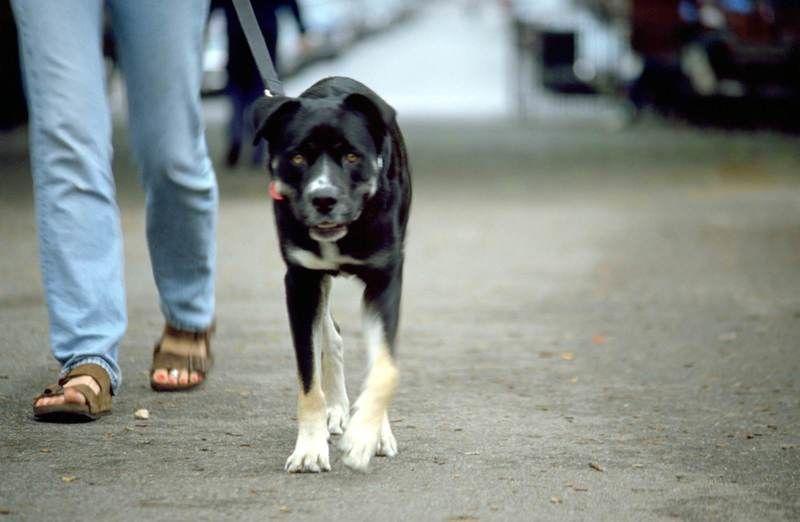 愛犬を人懐っこい犬にするにはどうしたらいいの?