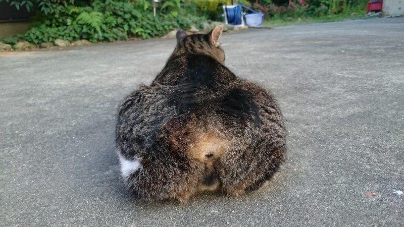 【画像9選】ハッシュタグ「 #猫尻 」のもふもふした猫のお尻が可愛すぎる