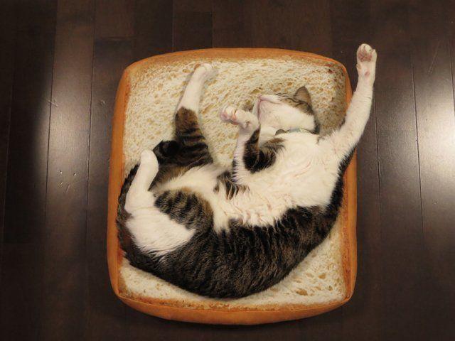 【画像】猫をダメにする「パンクッション」にハマった猫のダメっぷりが可愛い