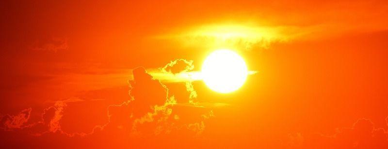 猫も犬もなる熱中症!対策を確認して暑い夏を乗り切れ!