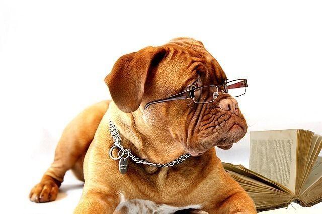 老犬になると起こす問題行動。老犬のサインを早めにみつけて介護の準備を