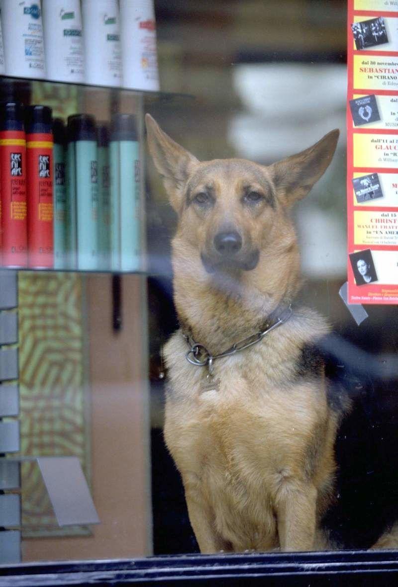 留守番中の犬のしつけ方法